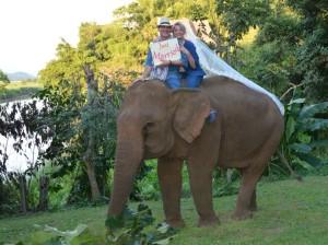 Elephant Wedding