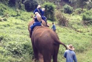 elephants (400x271)