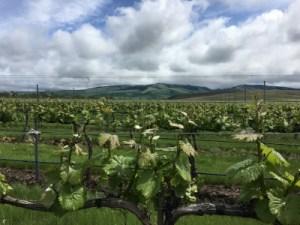 Top Wineries Walla Walla