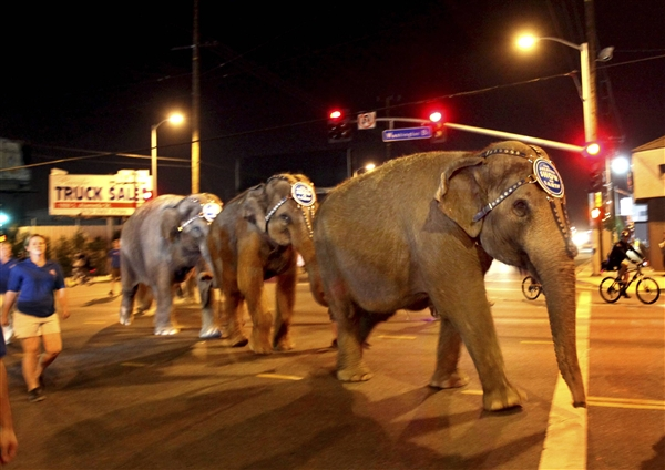 NYC inches closer to banning the use of wild animals for entertainment purposes.