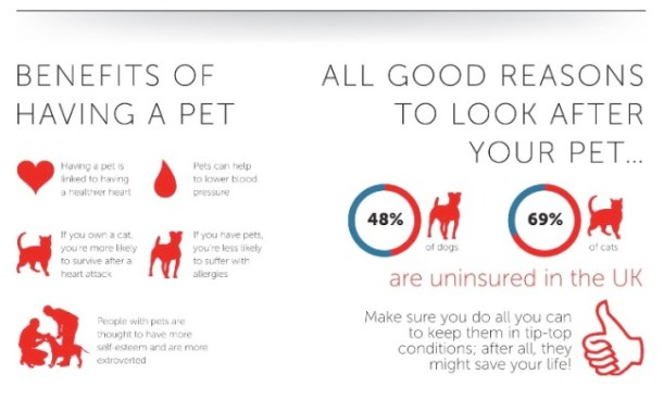 benefits of having a pet infographic