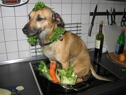 1. This dog that will help you cook stew