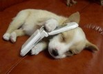 Dog on Cell phone