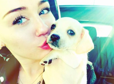 Miley Cyrus, who is no stranger to animal compassion, has recently added a new rescue dog to her adopted animal family.