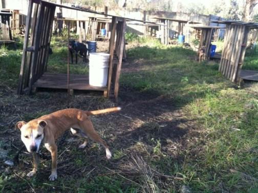 Photo Credit: Hillsborough County Animal Services