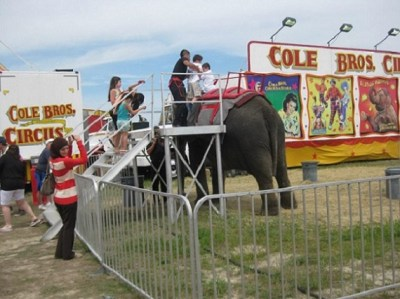 On April 14, 2013, protesters united against Cole Bros. Circus. Photo Credit: Lorraine Moe