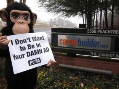 """PETA has been boycotting the use of chimp """"actors"""" for some time. Photo credit: PETA"""