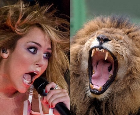 Miley or angry lion? Photo Credit: Veczan/AP