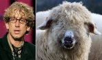 Andy And Sheep