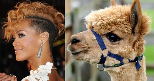 Rihanna or alpaca? Photo Credit: Durand/Getty; Skinner/Rex USA