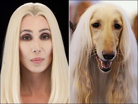 Cher or Afghan hound? Photo Credit: Micelotta/Getty; Shoer/Rex
