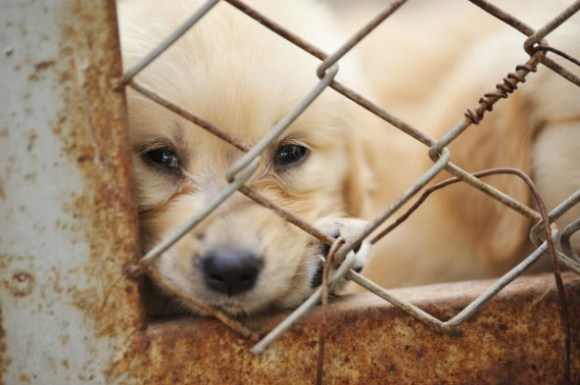 New Pennsylvania bill makes sure that animal abusers will pay. Photo Credit: Animal Law Coalition