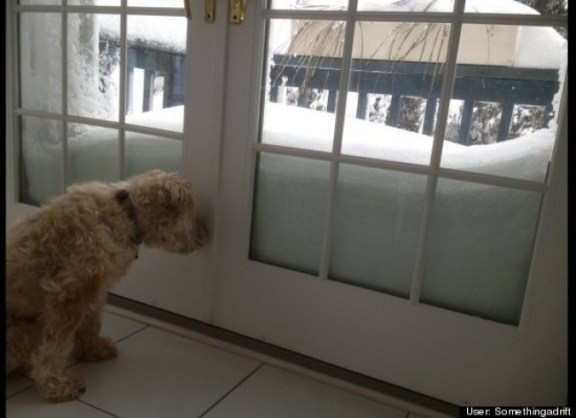 dog snowed in