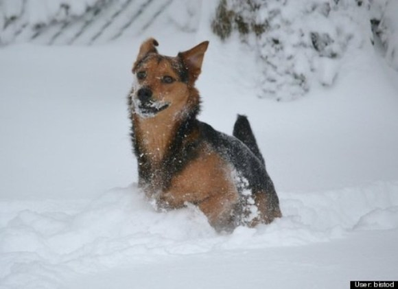dog in snow storm