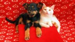valentines pet gifts