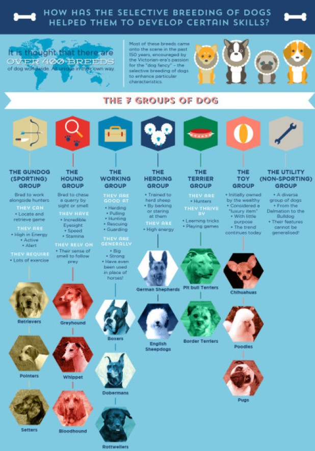Dog Breeding Specialized Skills Infographic