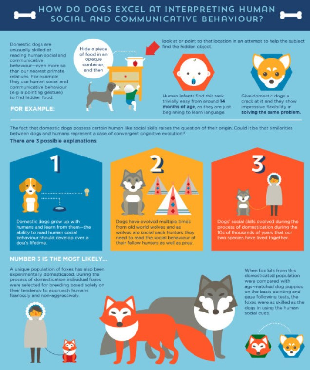 Dog Communication and Socialization Infographic