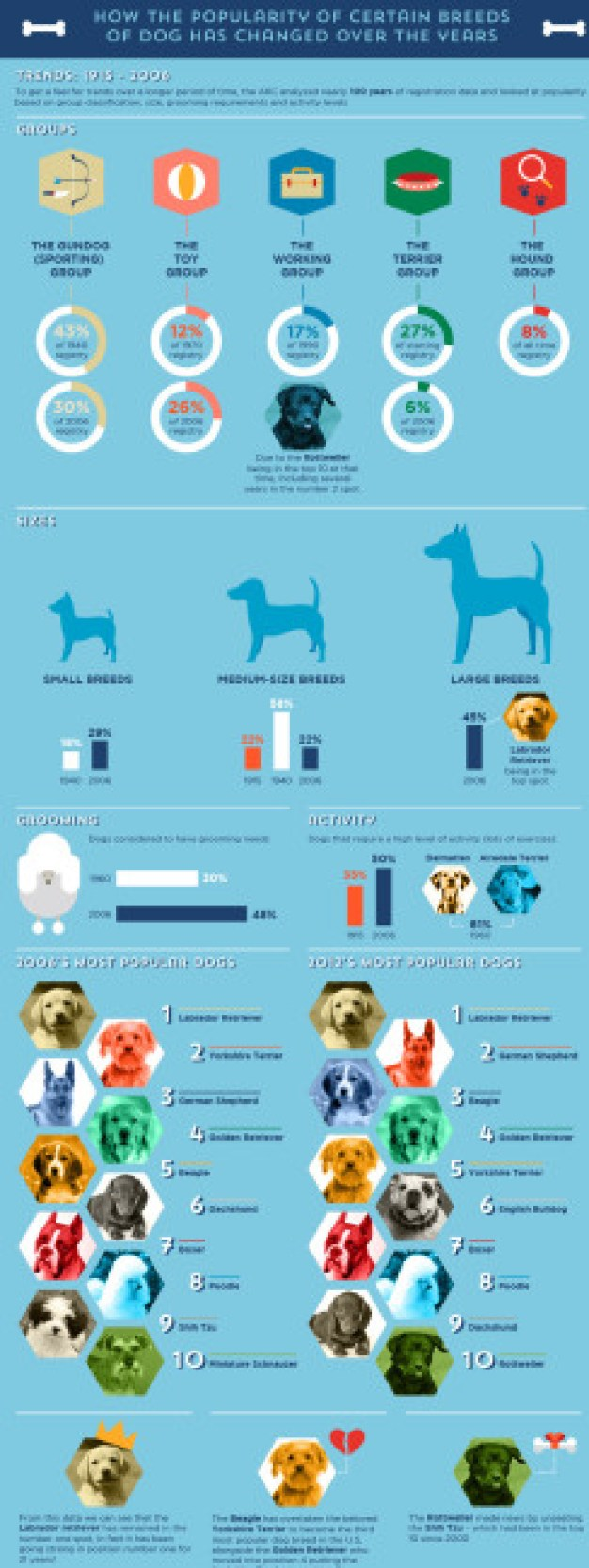 Dog Breed Popularity Infographic