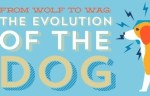 From Wolf To Wag Evolution of Domesticated Dog
