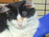 Cats showing signs of respiratory infection, nasal discharge, ocular discharge, and open mouth breathing. Photo credit: Niagara Falls Reporter