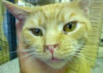 Sick shelter cat needs veterinary care