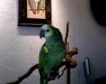 Parrot Sings Michael Jackson