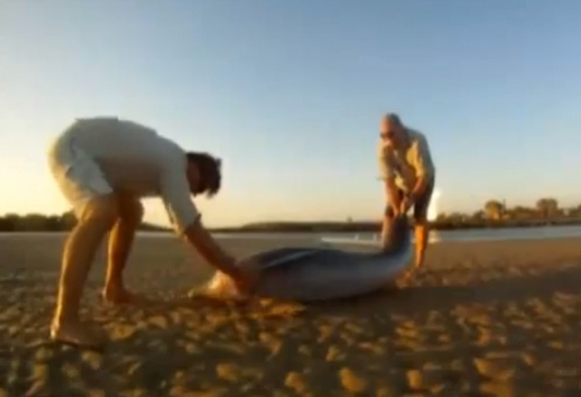 Two men save a dolphin on an Australian beach. Photo Credit: YouTube
