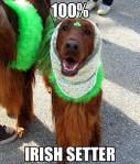 Irish Setter St Patricks Day