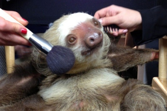 27 countries in the EU have banned cosmetics that are tested on animals. Photo Credit: imgur.com