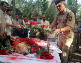 A senior police officer lays a floral wreath on Bombay's most famous dog 'Zanjeer' who worked with the Bomb Squad following his death from bone cancer in the city, November 17, 2000.  Zanjeer, a golden labrador  saved thousands of lives during the serial bomb blasts in the city in March 1993 by detecting more than 3329 kgs of the explosive RDX, 600 detonators, 249 hand grenades and 6406 rounds of live ammunition.  He was buried with full honours during a ceremony attended by senior police officials. Photo Credit: Reuters