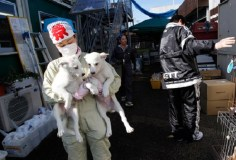 Pets rescued from Fukushima exclusion zone. Photo Credit: Reuters, Issei Kato