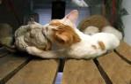 Cute Animal Photo Cat Kisses Lizard