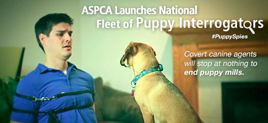 The ASPCA launches its fleet of puppy interrogators. Photo Credit: ASPCA