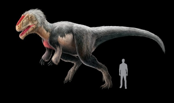 The feathered T. rex relative Yutyrannus, pictured in an illustration. Photo Credit: Xing Lida, National Geographic