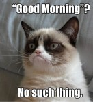 good morning grumpy cat