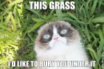 Grumpy Cat grass meme