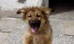 Borko Rescue Dog Dr. Litov Story