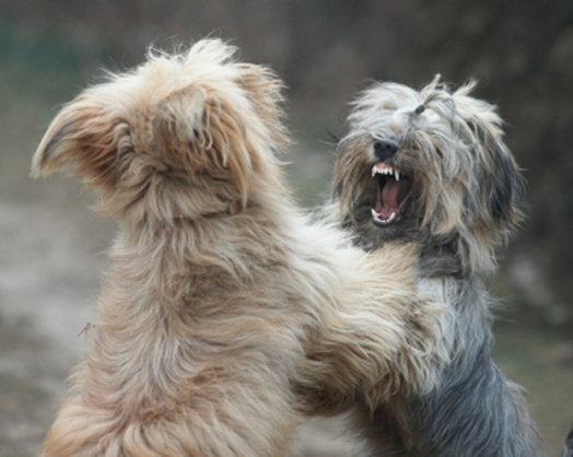 New study sheds light on cause of dog aggression. Photo Credit: iStock/Micha Bielecki