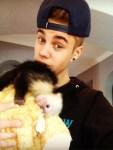 Justin Bieber and Capuchin Monkey