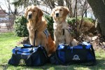 K-9 Parish Comfort Service Therapy Dogs