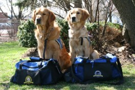 K-9 Parish Comfort Dogs Luther and Ruthie packed and ready for Boston. Photo Credit: Lutheran Church Charities