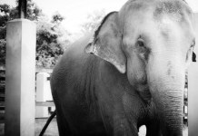 Circus Abuse, Disney Movie, Elephants, Elephants in the circus