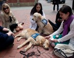 comfort service dogs boston