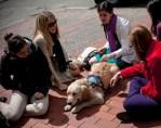 parish comfort dogs golden retrievers visiting boston