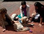 service dogs comfort boston bombings survivors