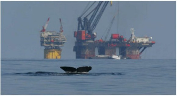 The fluke of a sperm whale is visible as it dives near an oil platform at Mississippi Canyon Block 127 in 2002. Photo Credit: NOLA.com