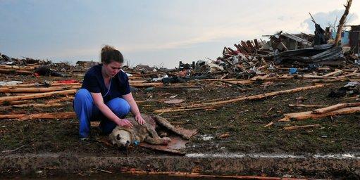Tiffany Bauman comforting an injured dog. Photo Credit: Nick Oxford, NY Times