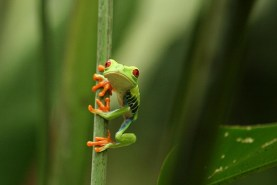 Check out the amazing creatures living in the Costa Rican rainforest. Photo Credit: arvindgrover