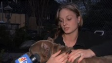Cain the pit bull, with Bonasera's daughter. Photo Credit: NBC