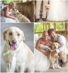 pet dog in couple's wedding pictures